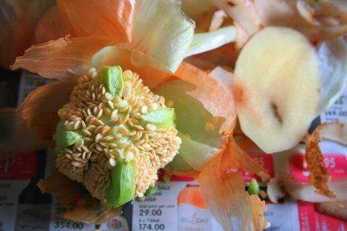 Green Pepper Core With Seeds
