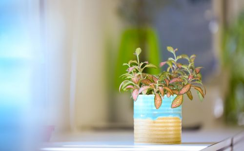 green plants plant potted plants