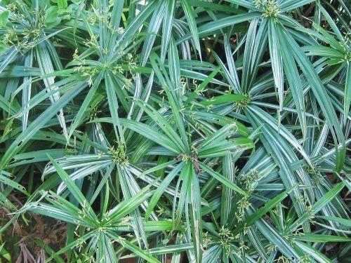 Green Plants In Garden