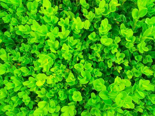 Green Plants Pattern