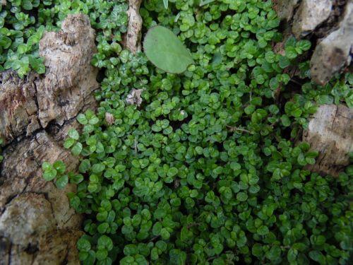 Green Plants Up Close