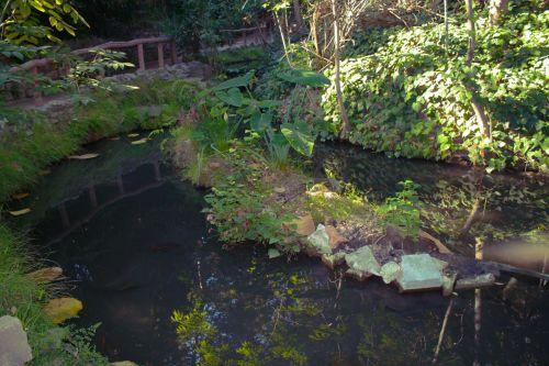 upė, žalias, gamta, medis, augalas, gėlė, vanduo, žalia upė