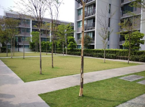 green space outdoor open space