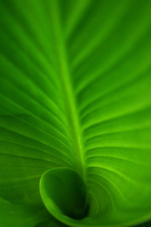 Green Spiral Leaf