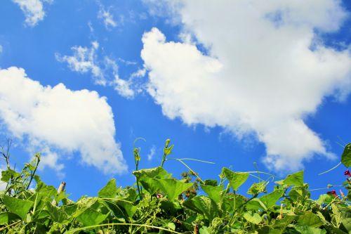 Green Tops, Blue Sky