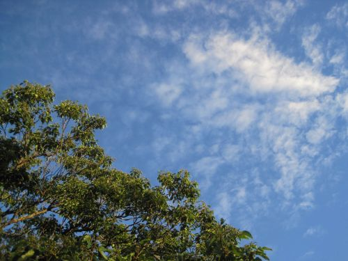 Green Tree Top And Feather Cloud
