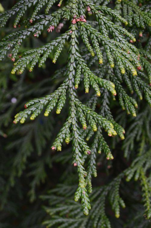 žalias, šakelė, medis, fonas, atvirukai, sezonas, pasveikinimas, kortelės, gamta, žalia šakelė