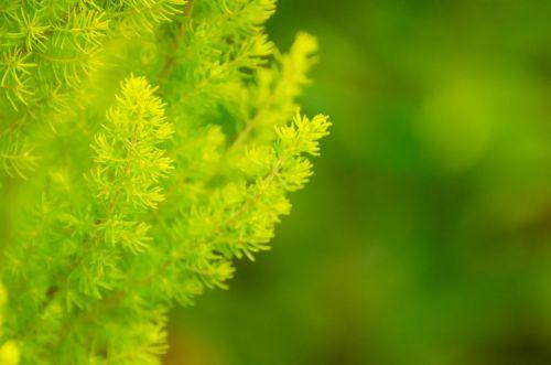 Green Twigs
