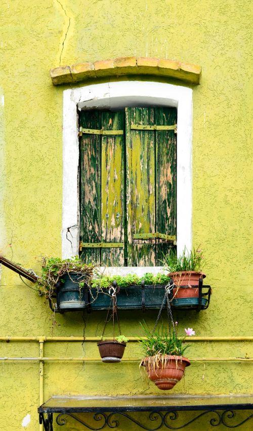 green window home balcony plants