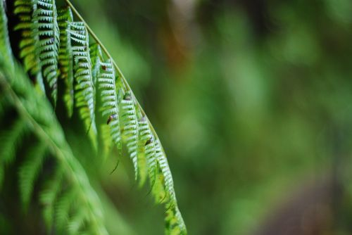 greenery fern background