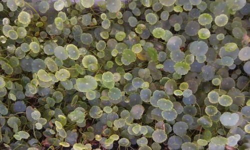 greenery nature carpet