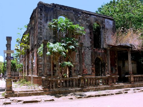 Greenery In Deserted Building