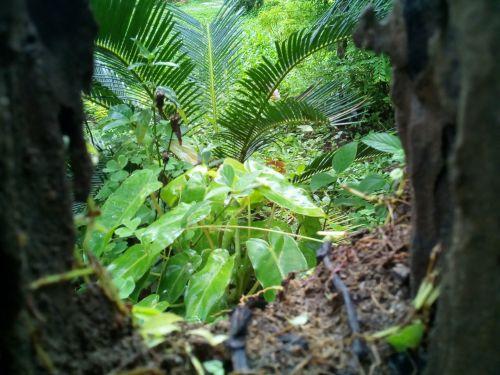 gražus, žaluma, augalai, žaluma, medžio kamienas