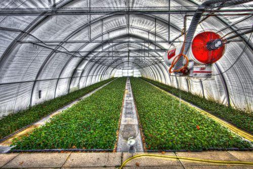 greenhouse slide tunnel crops