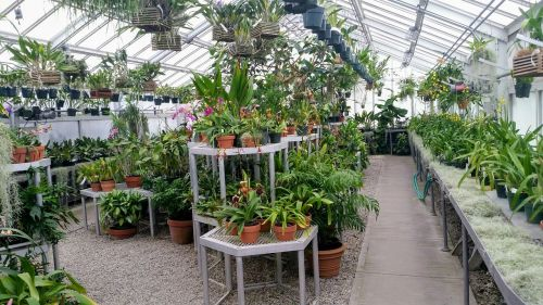 greenhouse indoor green house