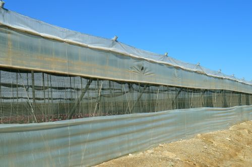 greenhouse cultivation plastic