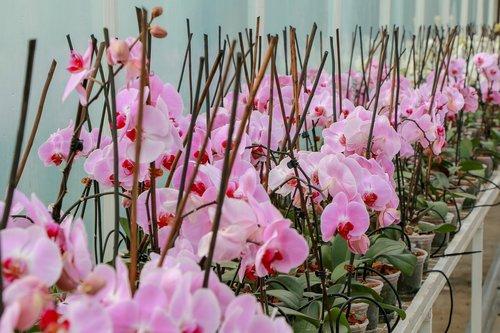 greenhouse  flowers  plants