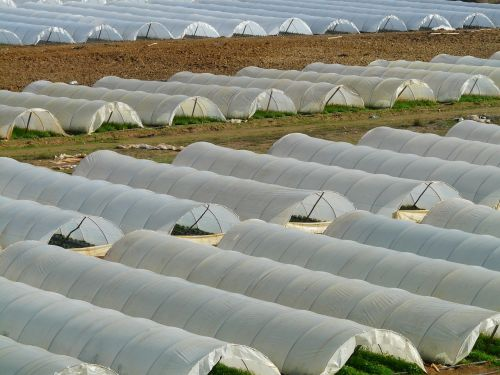 greenhouse nursery agriculture