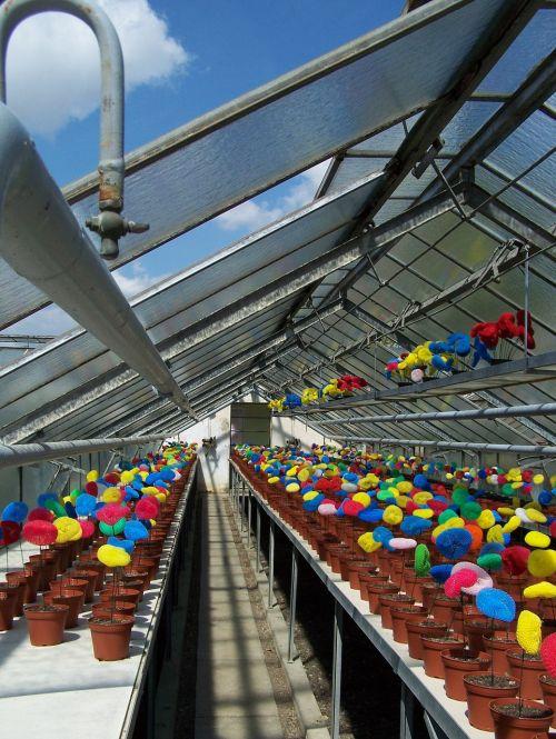 greenhouse installation flowerpot