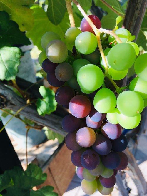greens  raisins  fruit