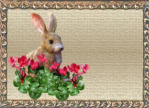 greeting card rabbit cyclamen