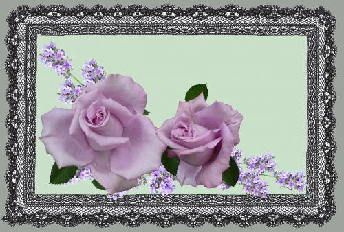 greeting card mauve rose