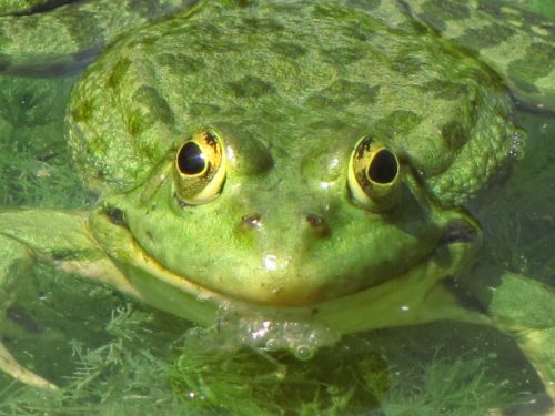 Frog 3