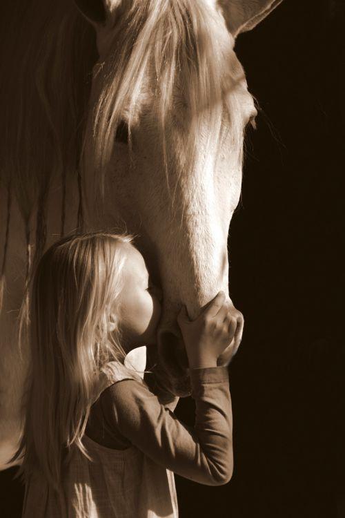 grey equestrian gray