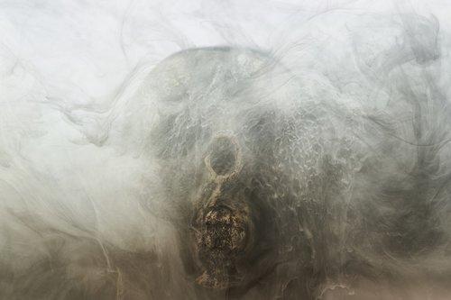 grey  skull  dry head