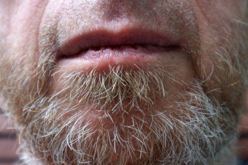 Grey Beard