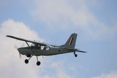 Grey Bosbok In The Air