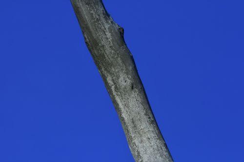 Grey Branch Against Blue Sky