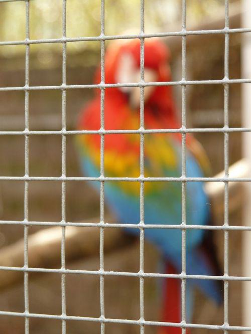 grid imprisoned parrot