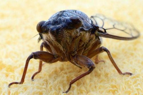 grille cicada nature
