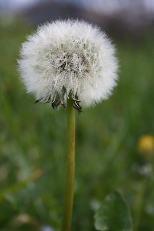 grinder  plant  flower