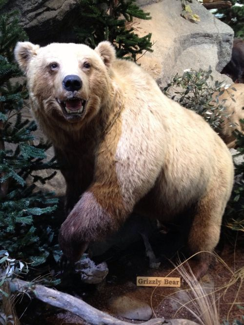 grizzly bear scarecrow museum