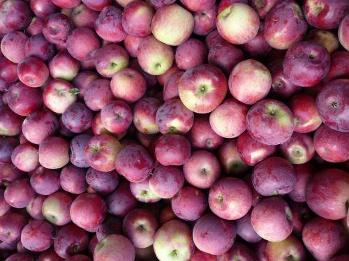 groceries apples fresh fruit