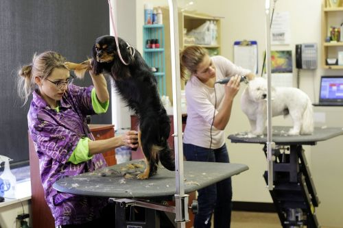 grooming pet dog