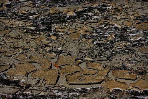 ground arid cracked
