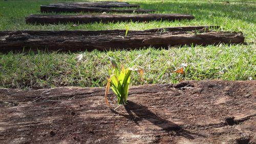 ground garden grass