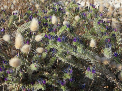 ground vegetation flora grasses