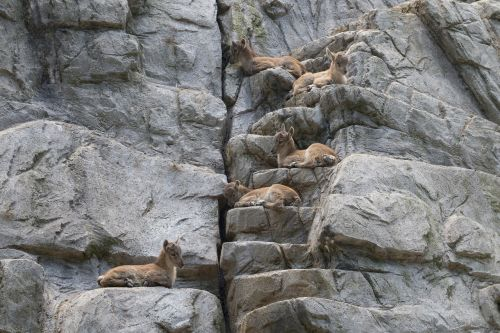 group animals animal world