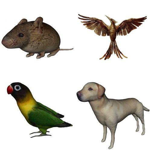 Group Of 4 Animals
