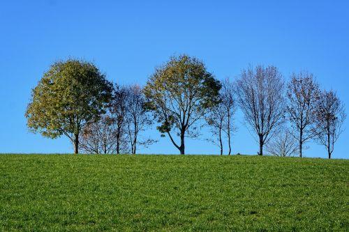 grove of trees meadow sky