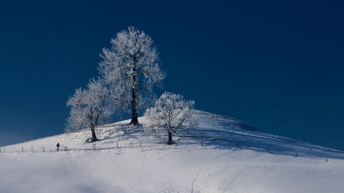 grove of trees wintry hill