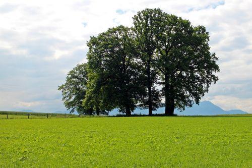 grove of trees field meadow