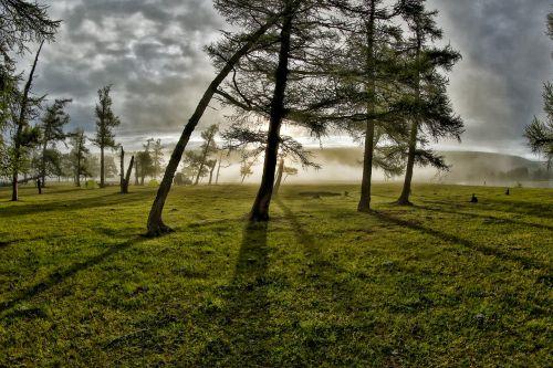groves morning mist light