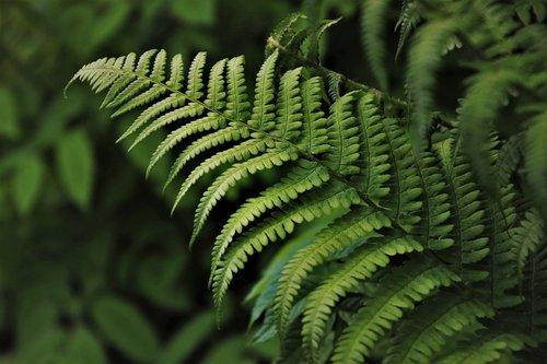 grow  green  ferns