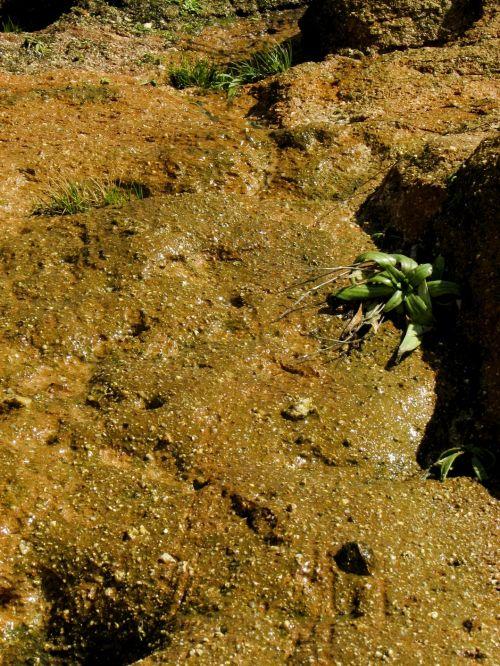 smėlis, žalias, augimas, atkaklumas, galia, augimas