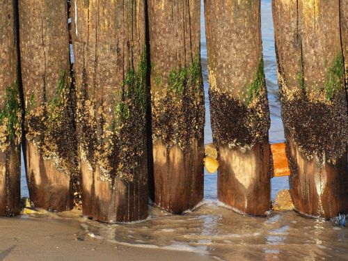 groynes coast baltic sea